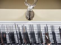 Deer Mount and Firearms